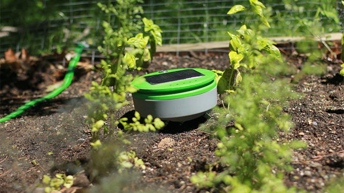 Tertill-Gartenroboter bekämpft Unkraut mit Solarenergie - Kleiner selbstständiger Gartenhelfer