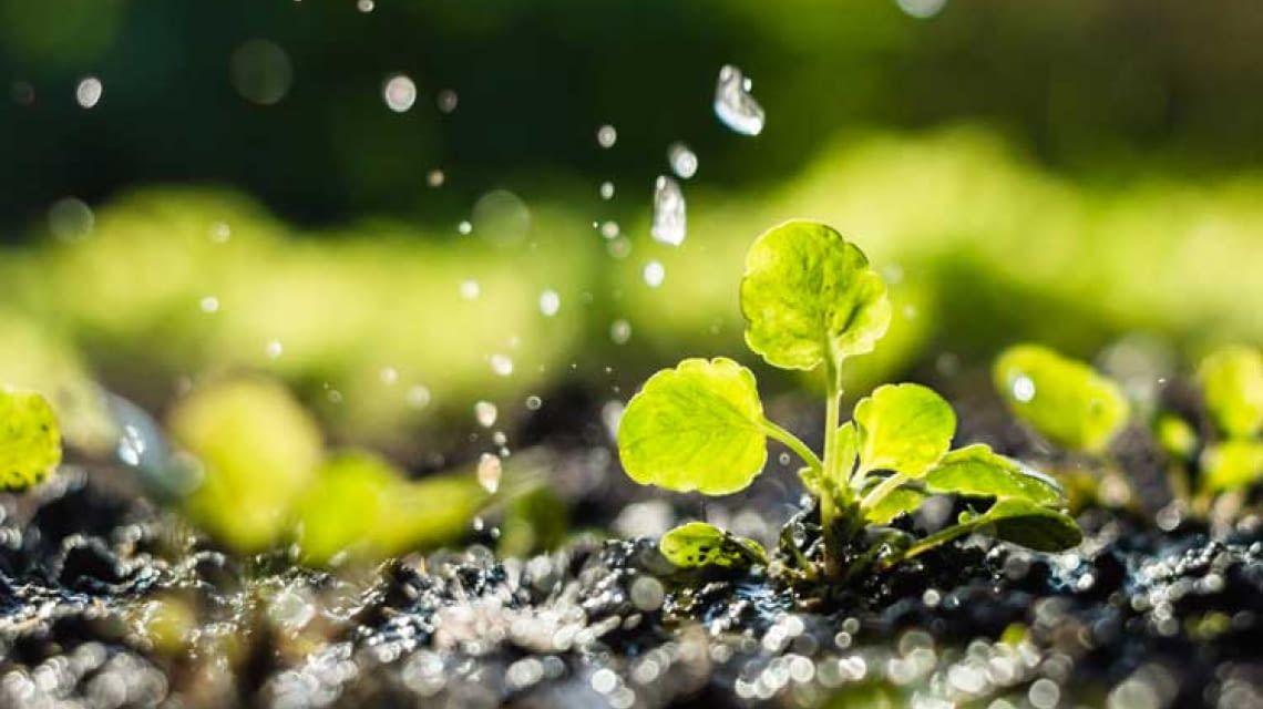 Digital Automatisch Pflanzen Bewässerung Bewässerungssystem Bewässerung Timer DE