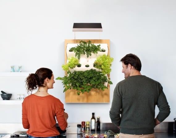 Herbert: Indoor Farming mit Hydrokultur statt Erdboden