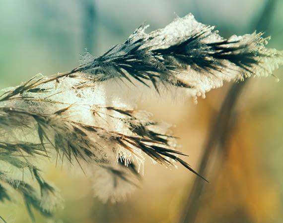 "Philips Hue Outdoor-Lichtszene ""Winter beauty"""