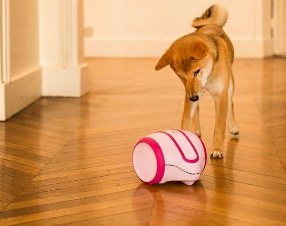 Der mobile Laika Roboter von Camtoy soll Hunde während der eigenen Abwesenheit sinnvoll beschäftigen