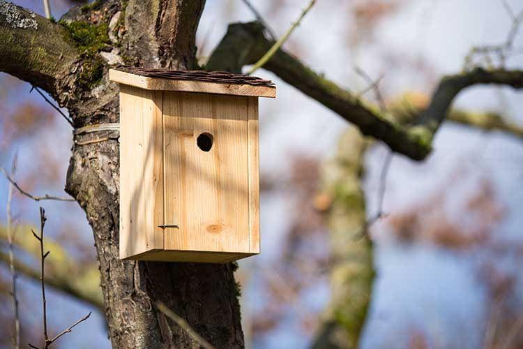 Die besten Vogelhäuser