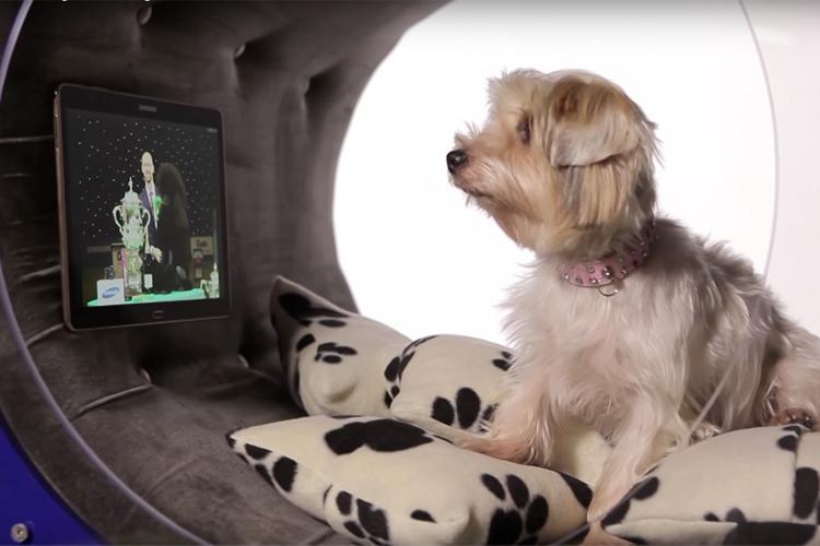 Doghouse von Samsung. Smart Home für die Hunde