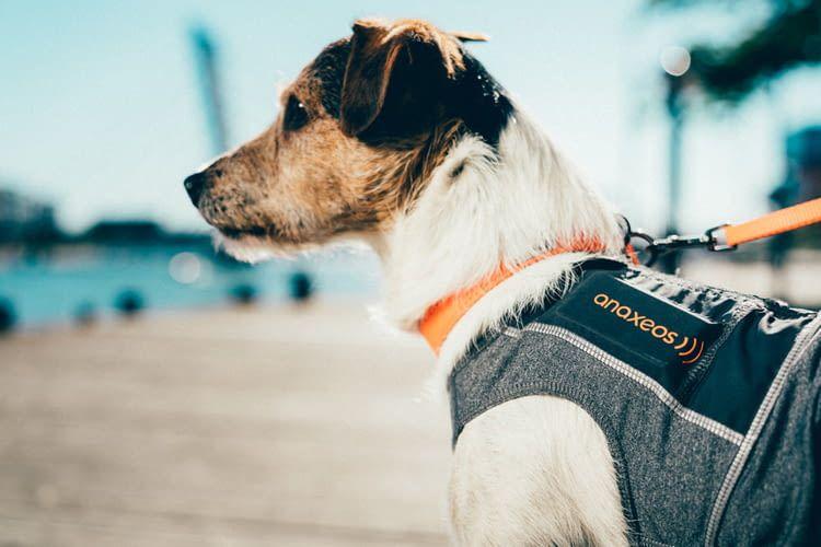 Der Fitness-Tracker für Hunde überwacht die täglichen Aktivitäten