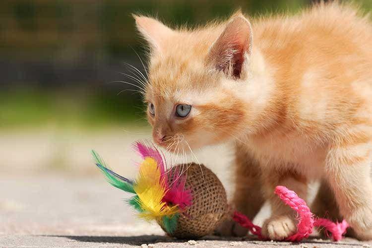Das beste Katzenspielzeug