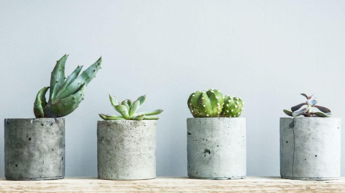 Thermostat aus wenn Pflanzen zu warm sind