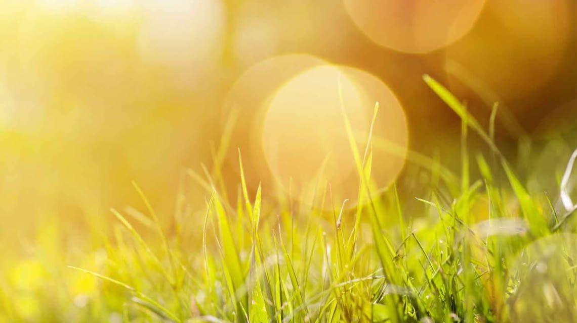 GreenIQ Hitze Bewässerung