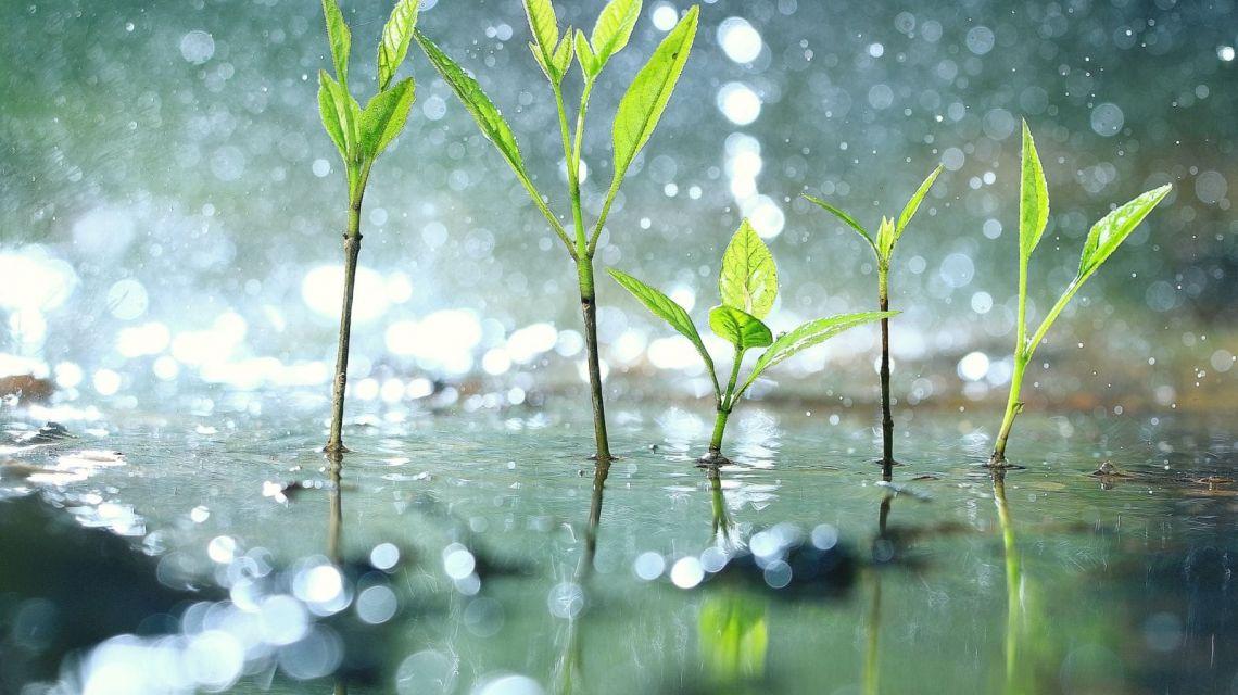 Bewässerung abbrechen wenn Regen erkannt wird