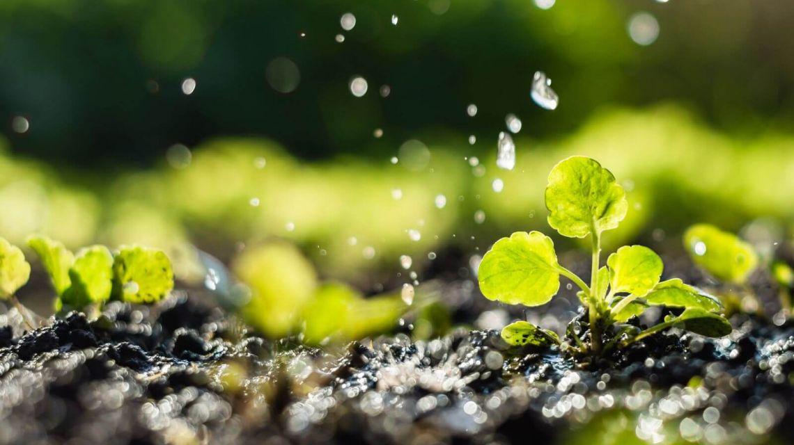 Räume Garten Smart Wasser
