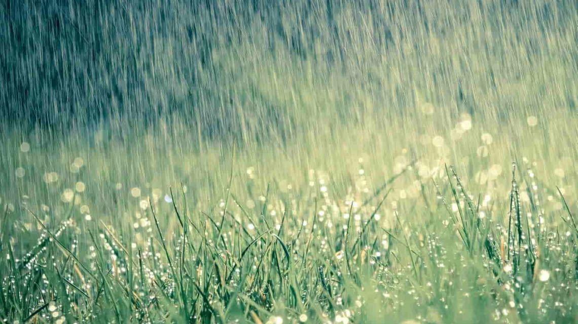 Rachio Bewässerung wetterabhängig