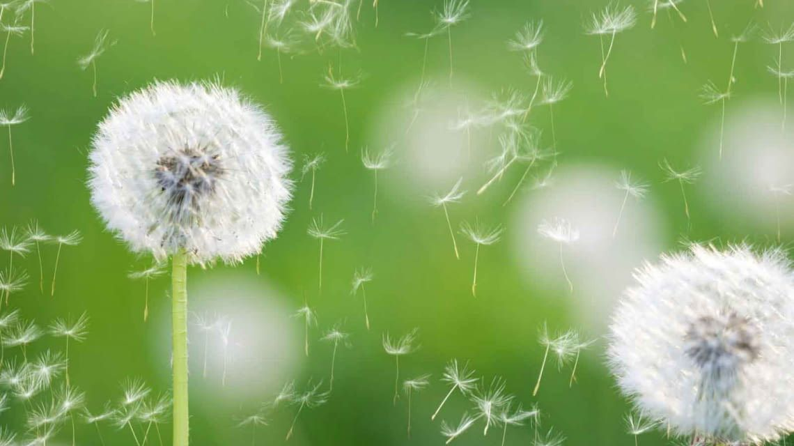 GreenIQ Benachrichtigung Wind Bewässerung