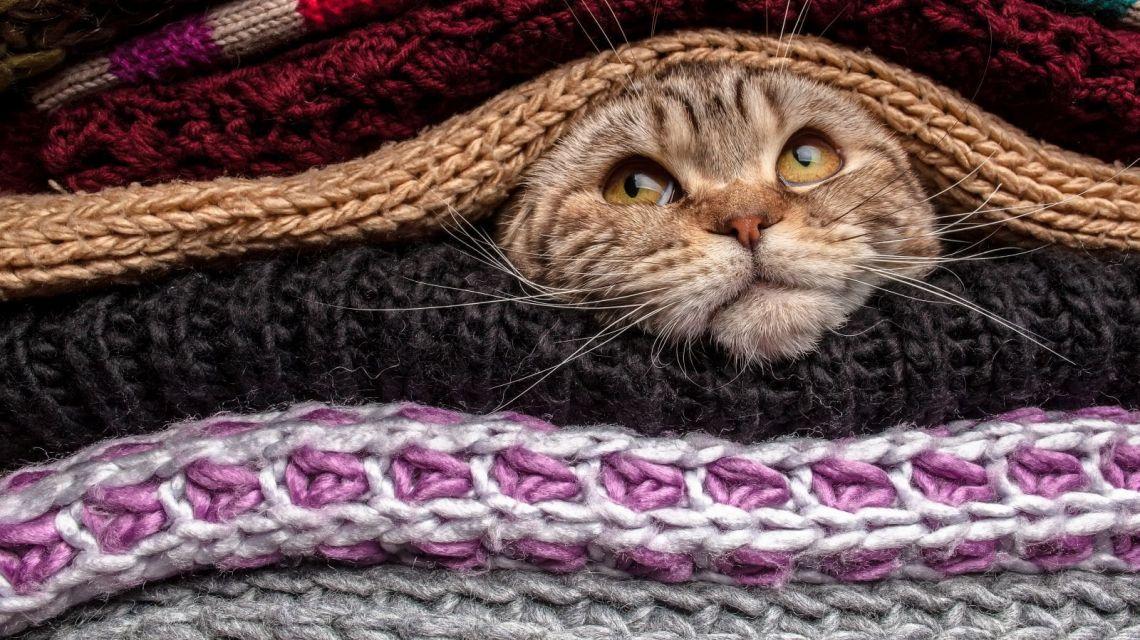 WeMo Motion erkennt soagr Ihre Katze im Kleiderschrank