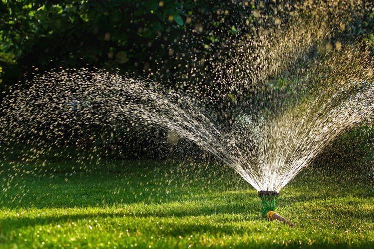 Sattgrüner Rasen, Sumpf oder Steppenlandschaft? Die Wassermenge macht's