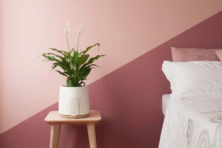 Clairy ist die natürliche Alternative zum Luftreiniger im Schlafzimmer