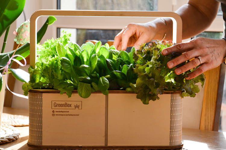 Bis zu 8 Pflanzen finden in der GreenBox Platz