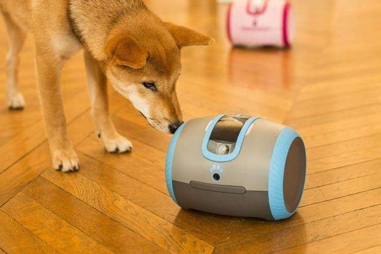 Über Laika können Hundebesitzer auch unterwegs mit ihrem Liebling kommunizieren