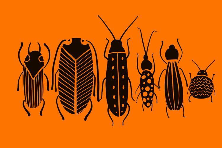 Die von FarmInsect gelieferten Insektenlarven wachsen exponentiell schnell