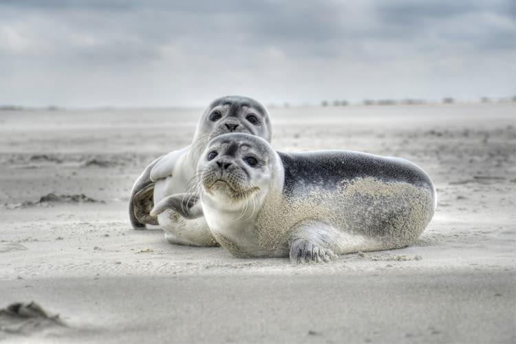 Der Seehundstation Norddeich Skill bietet viele Informationen zur Aufzucht von Seehunden
