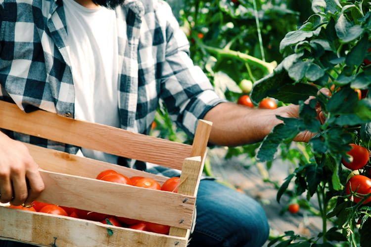 Der Bauernregel-Skill bringt die Weisheit der Bauern auf Amazon Echo und Co.