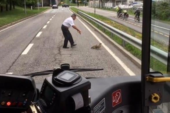 Ob die selbstfahrenden Busse auch für Tiere stoppen? Ab März 2018 wird der autonome Elektrobus in Oslo getestet