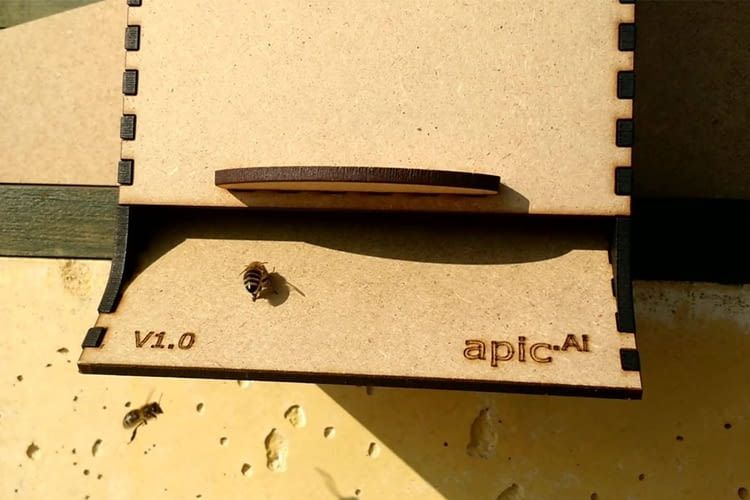 Aus- und einfliegende Bienen werden von apic.ai ebenso erfasst wie Polleneintrag und eventuelle Milben
