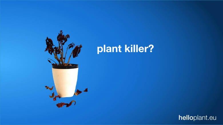 helloplant hilft Menschen mit braunem Daumen