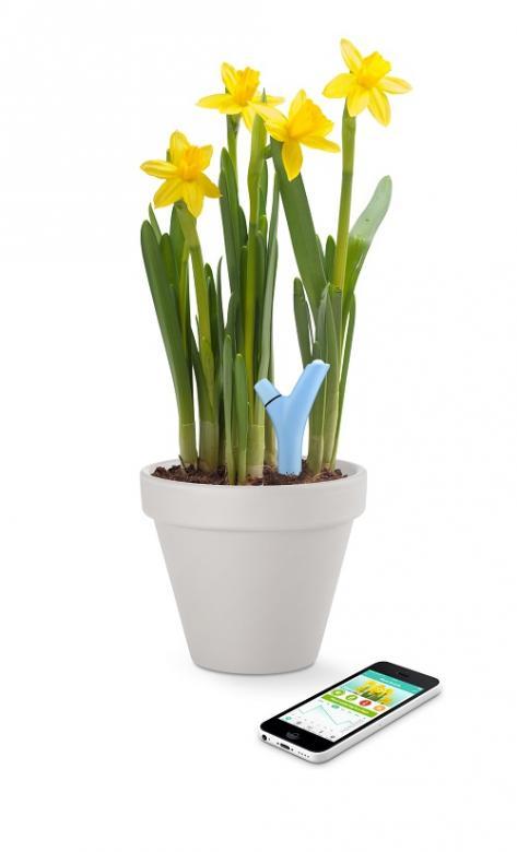 Parrot Flower Power smartes System für Kübelpflanzen @ global.parrot.com