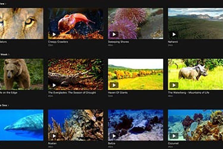 Love Nature ist eine der wenigen 4K Apps für das Apple TV
