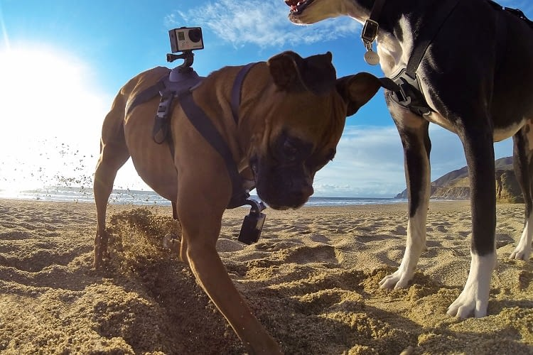 GoPro Fetch ist eine Spezialkamera für tierische Actionfans