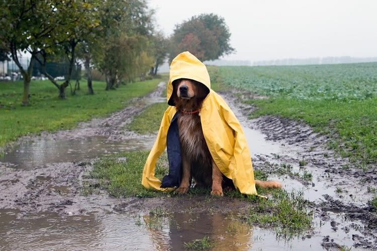 Spezielle Alexa-Skills warnen, wenn aus Hundewetter Hochwasser wird