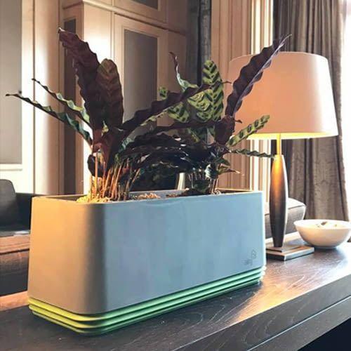 AIRY ermöglicht die natürliche Luftreinigung durch die Wurzeln der Zimmerpflanze