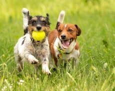 Zusammen Spielen macht gleich doppelt Spaß