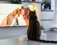 Filme und Serien smart schauen - wir zeigen wie's geht