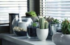 smarte-bewaesserung-fuer-zimmerpflanzen