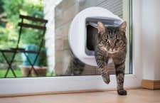 Die besten Katzenklappen