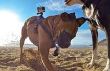 Hunde können eigene Videos von ihren Abenteuern drehen