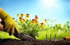 Alexa hilft mit diesen Garten-Skills dem Grünen Daumen auf die Sprünge