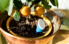 helloplant sendet Statusmeldungen, sollte eine Pflanze durstig sein