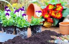 Koubachi Pflanzensensoren verschaffen jedem einen grünen Daumen